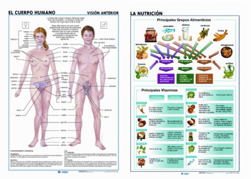 Láminas Anatomía de Primaria Edigol (70x100 cms.)