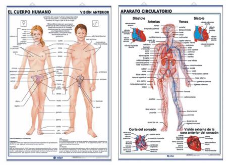 Láminas Anatomía de Secundaria Edigol (70x100 cms)